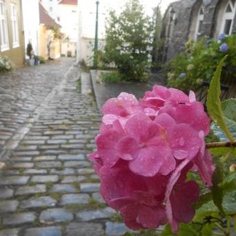 Ruelle fleurie du Vieux Bergen